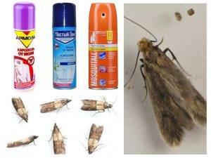 Вызов травить тараканов