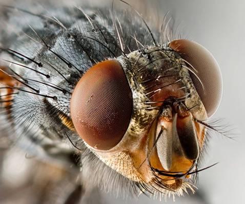 Как мухи спариваются
