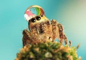 В квартире много пауков