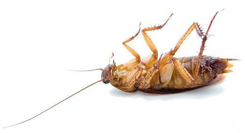 Как избавить от тараканов в квартире