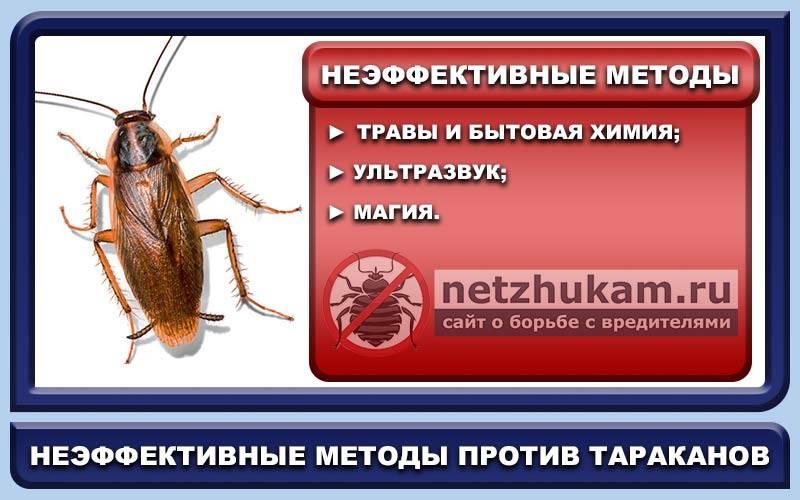 Тараканы в микроволновке как избавиться