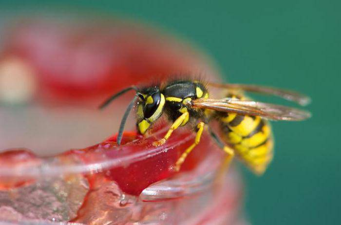 Домик осы