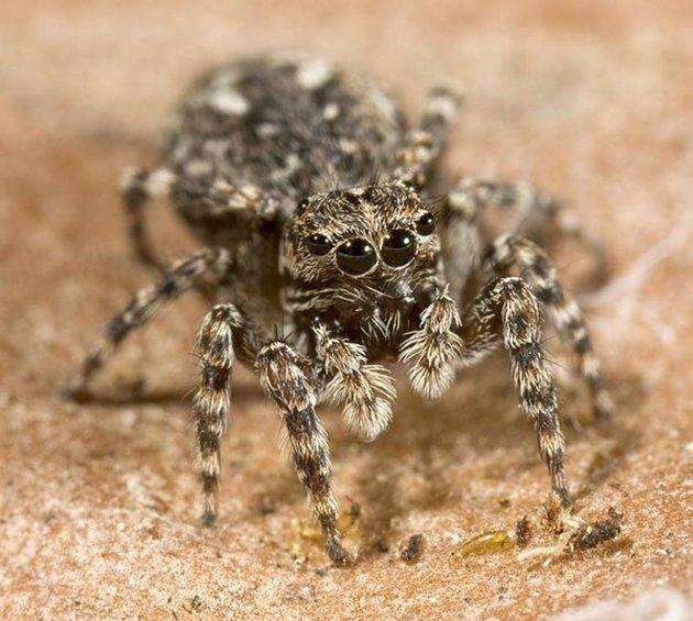 Что означает паук во сне