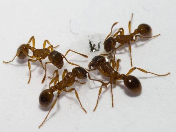 Средство от тараканов в шприце