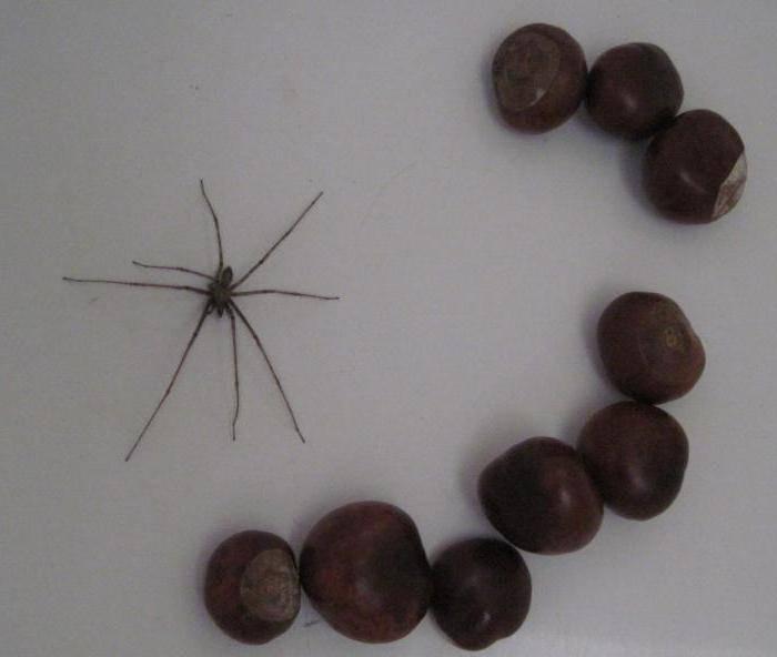 Средства от пауков в доме