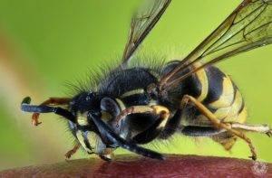 Покусали осы что делать