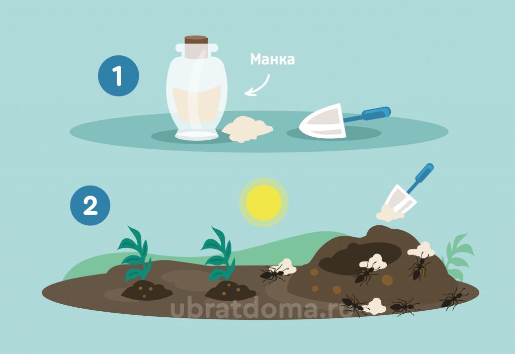 Как избавиться от рыжих муравьёв на огороде