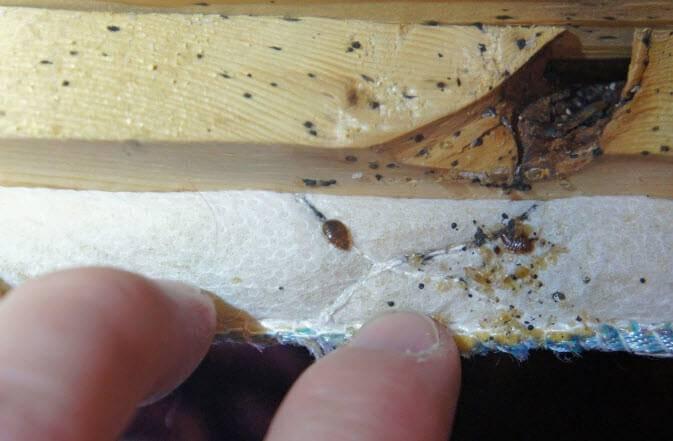 Как найти гнездо клопов в квартире