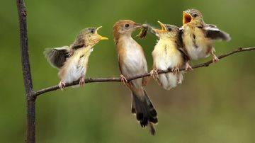 Естественные враги клещей в природе