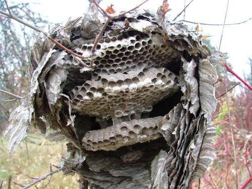 Средство против осиных гнезд