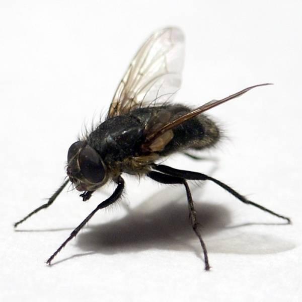 Средства от мух в доме