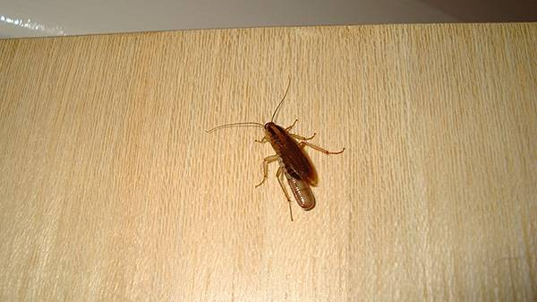 Домовой от тараканов