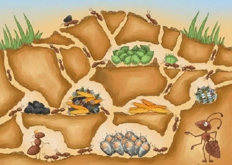 Какие бывают муравьи