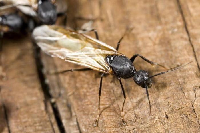 Куда деваются муравьи зимой