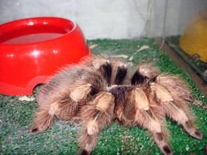 Откуда дома берутся пауки
