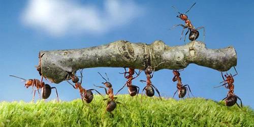 Если снятся муравьи к чему это
