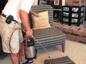 Травяные блохи в доме как избавиться