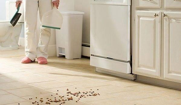 Откуда муравьи в квартире