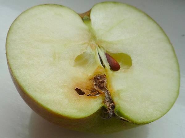 Яблоневая моль