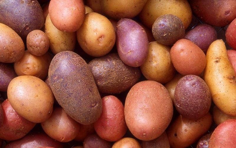 Борьба с молью картофельной