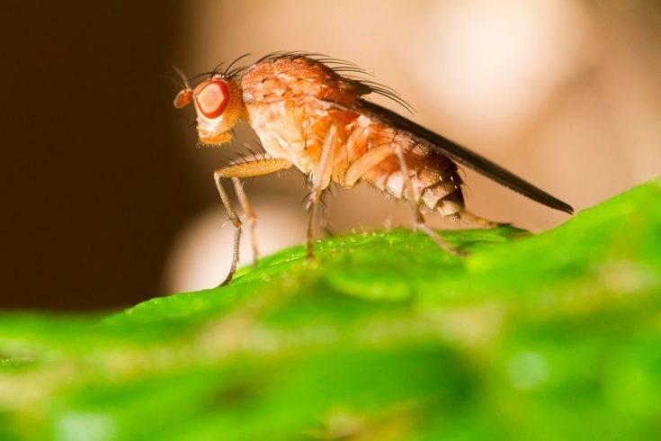 Откуда появляются мухи