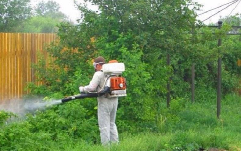Как бороться с комарами на дачном участке