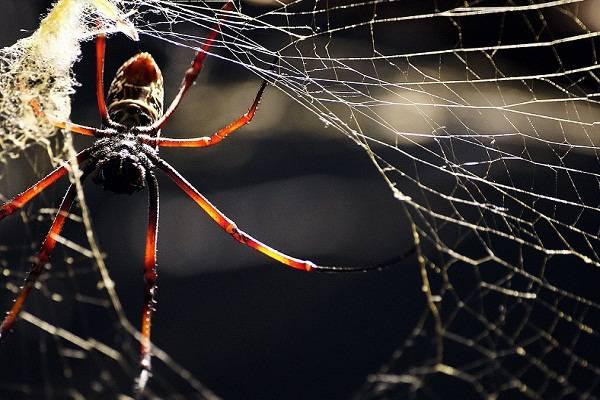 К чему ползет паук вниз