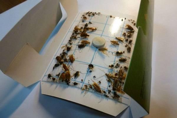 Чем вывести тараканов в квартире народными средствами