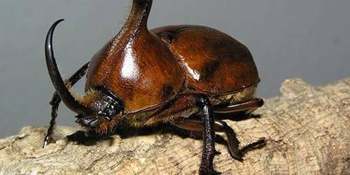 К чему снятся пауки жуки