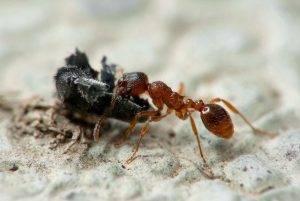 Откуда берутся муравьи