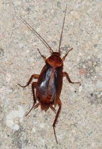 Тараканы кусаются или нет
