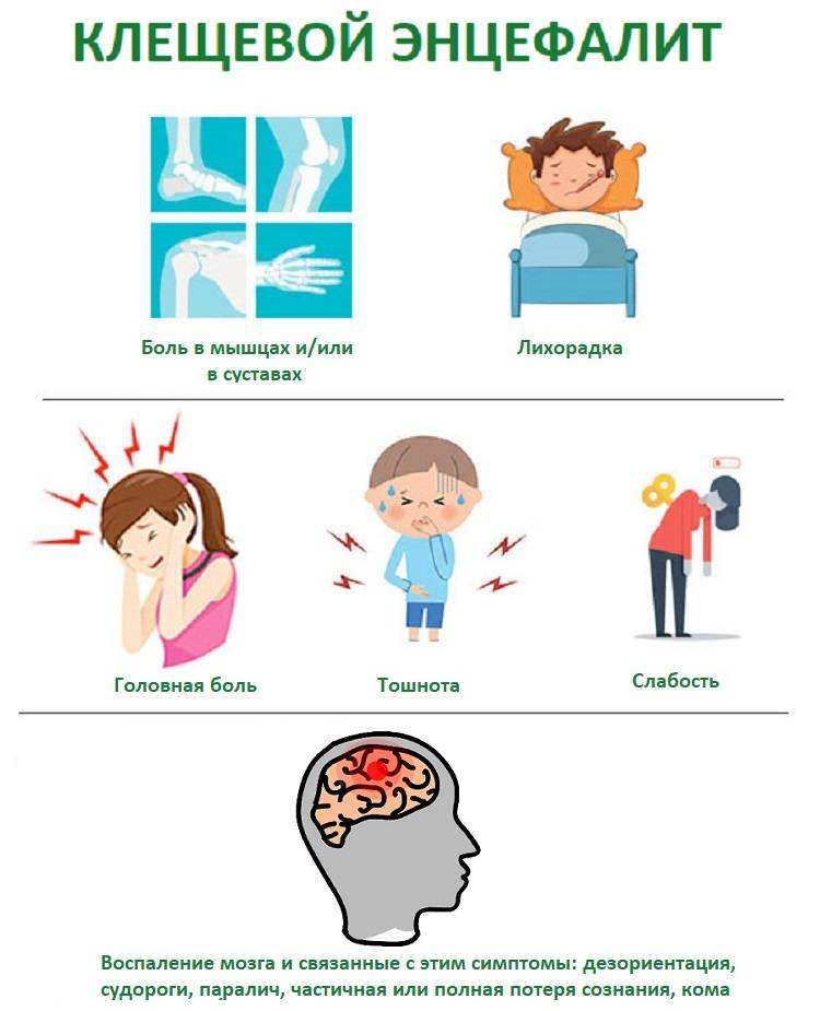 Какие симптомы при укусе клеща