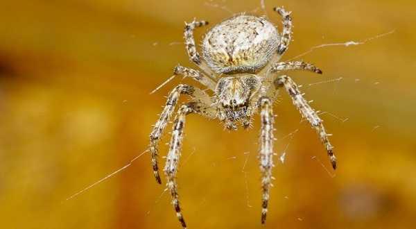 Примета паук спустился