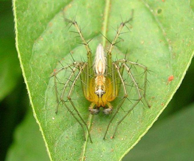 Самый большой паук на земле