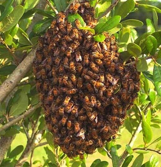 Как защититься от пчел