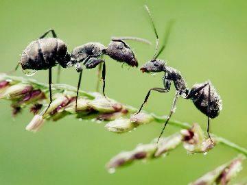 Средство от муравьев delicia