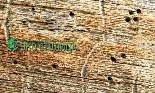 Как уничтожить короедов в деревянном доме