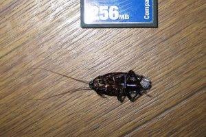 Как убрать тараканов из квартиры
