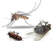 Кусаются ли домашние муравьи