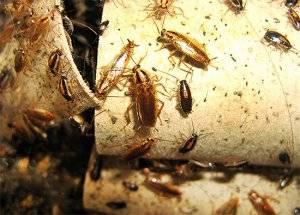 Паста от тараканов globol