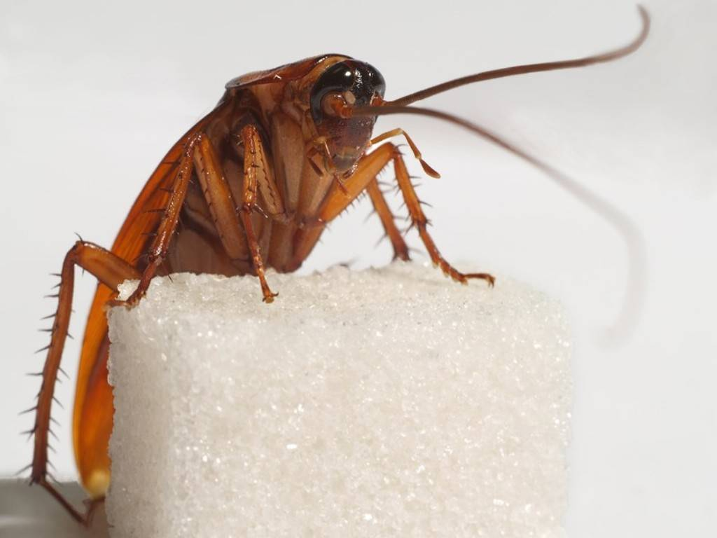Куда делись тараканы из российских квартир