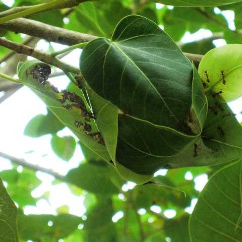 Польза муравьев в природе