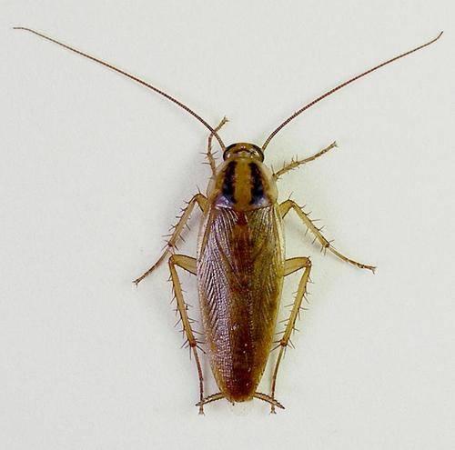 От чего появляются тараканы в квартире
