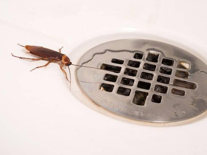 Если завелись тараканы что делать