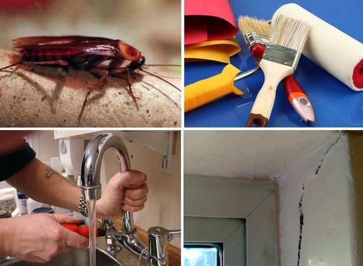 Как эффективно избавиться от тараканов в квартире