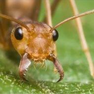 Какая польза от муравьев