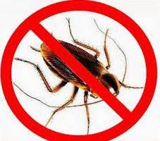 Эффективное средство от тараканов в домашних условиях