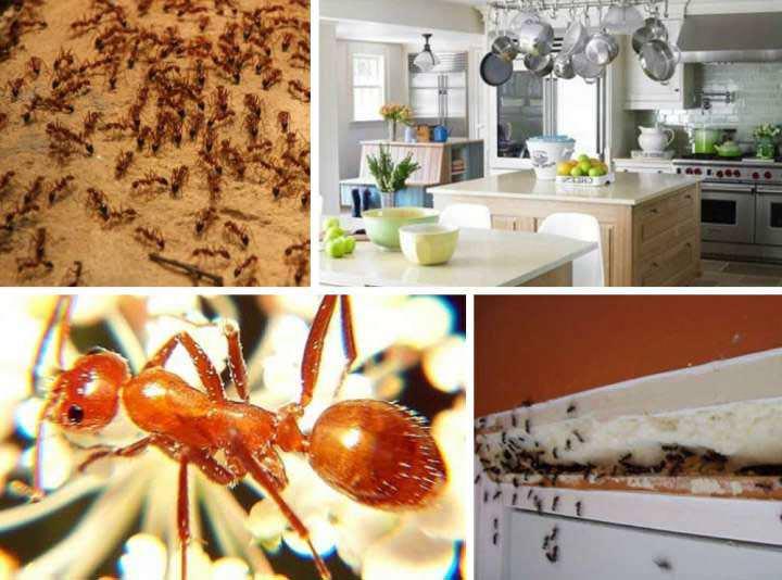 Комбат от муравьев