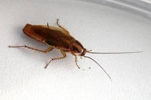 100 к 1 ответы куда ушли тараканы