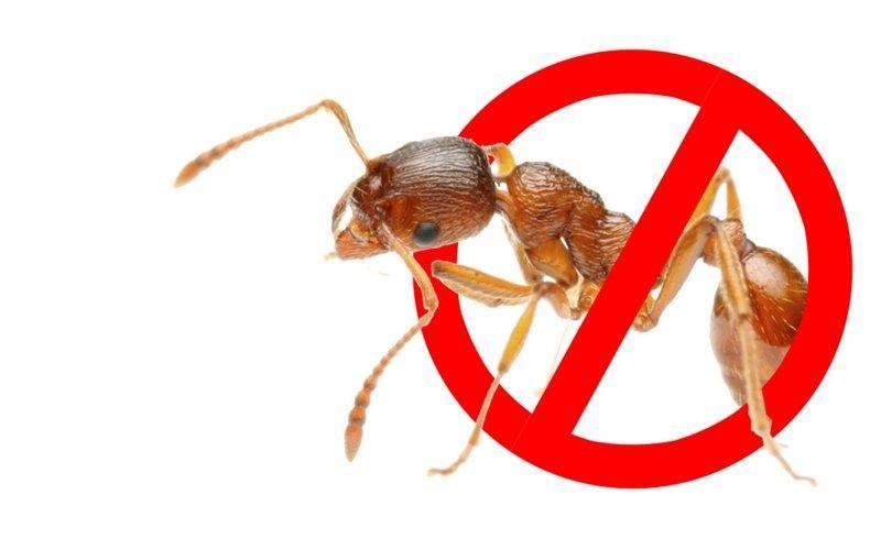 От муравьев в доме
